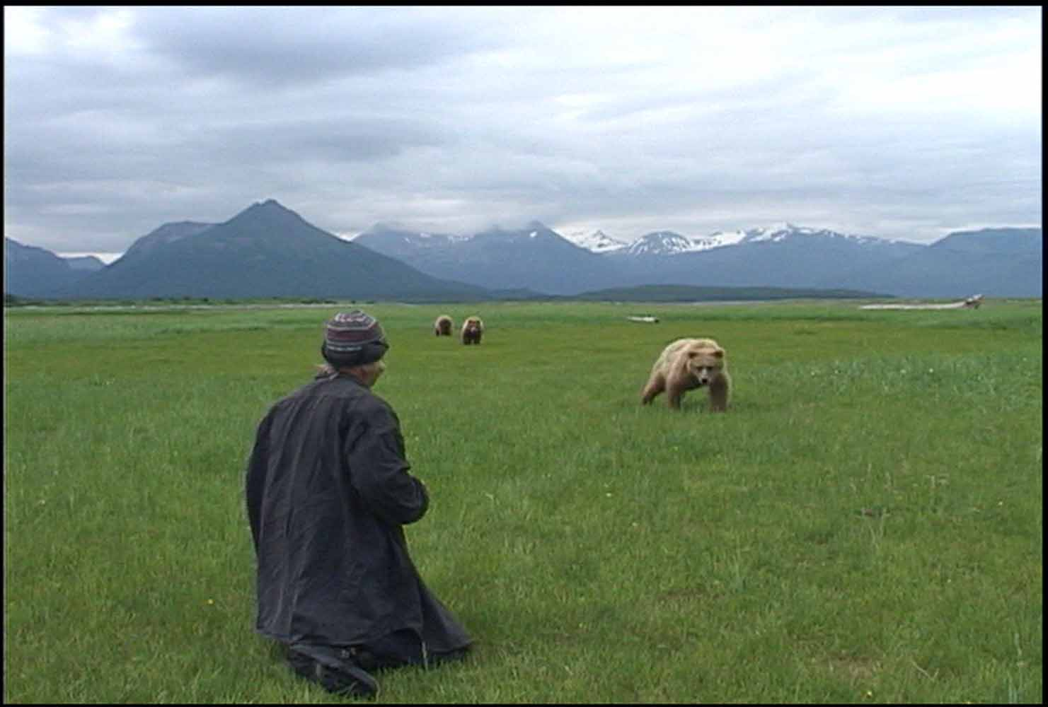 Timothy treadwell grizzly man